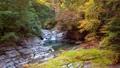 秋の面河渓 45202916