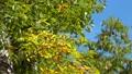 旧軽井沢の風にそよぐ木々 45218225