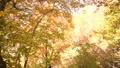 白樺 森林 樹林 45222592