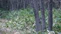 秋の森で、木の上から降りてきた野生のリス 45226599