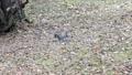 秋の森の中を駆ける野生のリス 45226601