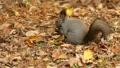 餌の中から見つけた木の実を頬張る野生のリスを望遠で撮影._5 45226602