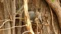 秋の森の木の枝に居る野生のリスの様子 45226608