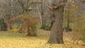 與松鼠一起逃離的松鼠在秋天的黃色落葉中逃跑 45269929