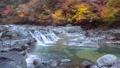 秋の面河渓 45277555