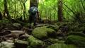 縄文杉へ向かう登山道を歩く男性 45379173