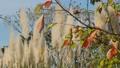 秋の風景 45431881