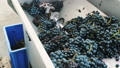 grapes, squeeze, production 45464340