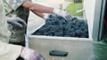 grapes, press, machine 45464346