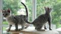 ลูกแมว,แมว,สัตว์เลี้ยง 45464909