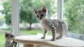 ลูกแมว,แมว,สัตว์เลี้ยง 45464913