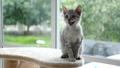 ลูกแมว,แมว,สัตว์เลี้ยง 45464915