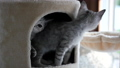 Cute cat playing and lying on cat tower  45464916