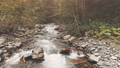 Aerial Flight: mountain river in autumn forest 45520295