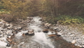 Aerial Flight: mountain river in autumn forest 45520299