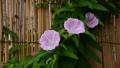 bloom, blossom, blossoms 45536700