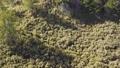 空拍 台灣 南投 郡大山  Aerial  Nantou Jun Mountain  45574841
