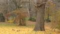 一隻松鼠,在踢落葉的同時,全力以赴逃脫 45593059