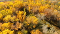 Aerial view footage of the yellow leaves of Cottonwood Forest Utah 45674999