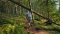 woman, forest, walk 45705589