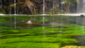 Scenic nature of beautiful waterfall and pool of fresh water with green seaplant 45720742