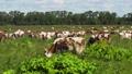 奶牛 牧场 原野 45738979