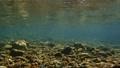 川の中 45742624