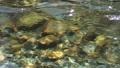 川の流れ  水面 45788654