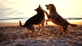 Stray dogs on the sea beach. Slow motion. 45816384