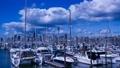 Auckland harbor New Zealand 45842528