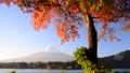 Autumn leaves and Mt. Fuji by Lake Kawaguchi-6078083 45860098
