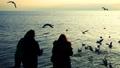 People feed seagulls on the seashore. Slow motion. 45908420