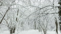 Winter forest in the snow. Snow and large snow drifts 45929813