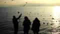 People feed seagulls on the seashore. Slow motion. 45935106