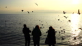 People feed seagulls on the seashore. Slow motion. 45935109