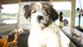子犬と赤ちゃん 子犬 赤ちゃん 女児 一歳児 女の子 人物 女性 かわいい 動物 戌年 46005467