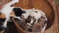 cat dog animal 46022369
