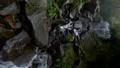 箱根的Hiryu瀑布 46022392