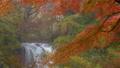 Kaneyama瀑佈在秋天 46022728