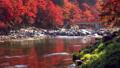 香嵐渓の紅葉 2018 フィクス撮影 46027760