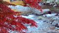 香嵐渓の紅葉 2018 フィクス撮影 46028029
