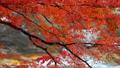 香嵐渓の紅葉 2018 フィクス撮影 46028030
