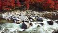 香嵐渓の紅葉 2018 フィクス撮影 46028424
