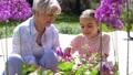 grandmother, granddaughter, garden 46062108