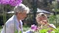 grandmother, granddaughter, flower 46062121
