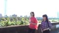 sightseeing, asakusa, trip 46078398