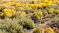 Grand Canyon Upstream Colorado River Autumn Yellow Leaves Utah 46092916