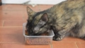 Cat, lovely mammal animal and pet relax at home 46110762