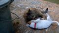หมา,สุนัช,สุนัข 46141365