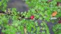 秋の花園渓谷 46157779